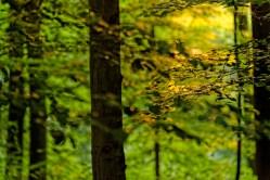 Bild: Morgenstimmung im Wald bei Bräunrode im Unterharz. NIKON D700 mit AF-S NIKKOR 28-300 mm 1:3.5-5.6G ED VR. ISO 640 ¦ f/7,1 ¦ 250 mm ¦ 1/15 s ¦ kein Blitz. Klicken Sie auf das Bild um es zu vergrößern.