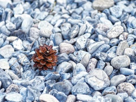 Bild: Unterwegs auf den Feuersteinfeldern zwischen Neu Mukran und Prora auf der Insel Rügen. Durch den starken Sameneintrag stressresitenter Sträucher und Bäume holt sich Natur langsam zurück, was ihr gehört. Klicken Sie auf das Bild um es zu vergrößern.