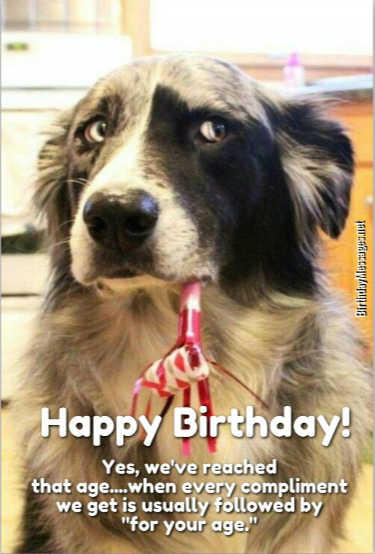 Funny Birthday Wishes Funny Birthday Messages