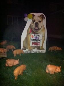 Bulldog Lawn Greeting with pig lawn ornaments