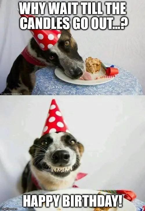 Happy Birthday Wishes Silly Puppy