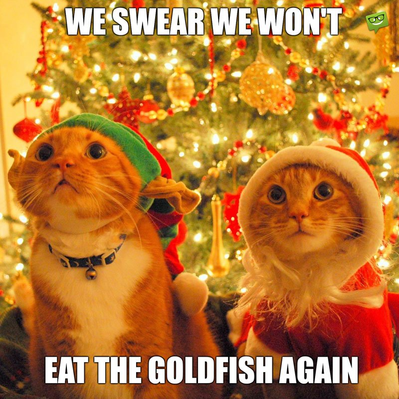 50 Funny Merry Christmas Memes Jingle All The Way