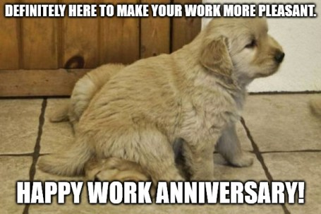 happy work anniversary meme funny
