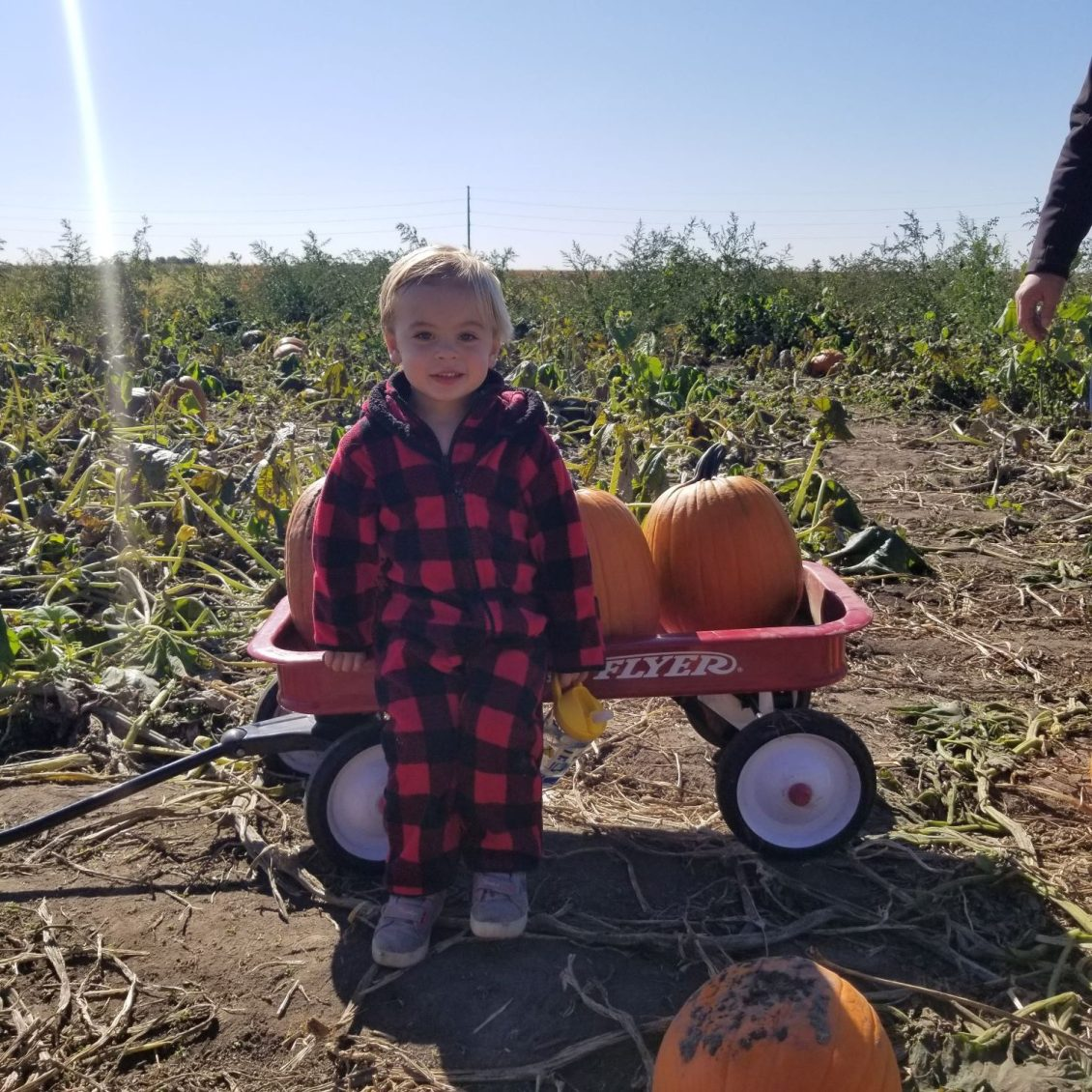 toddler with wagon and pumpkins life updates fourth quarter 1