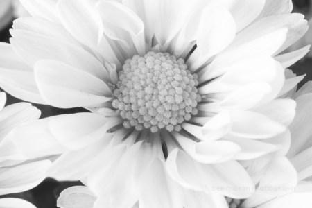 Week 1 – Botanical Portrait Photography & Lighting Class