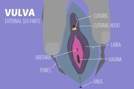 Average size clitorises clitoris images 243
