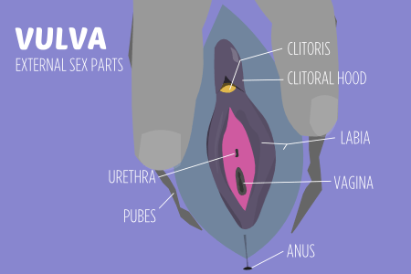 Join clitoris inside the vagina have hit
