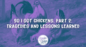 So I Got Chickens, Part 2: Tragedies and Lessons Learned