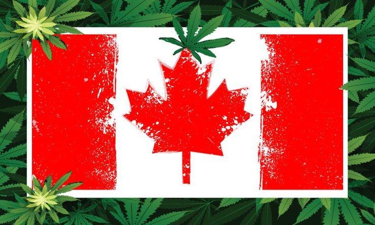 DMG Cannabis CDN.width 800