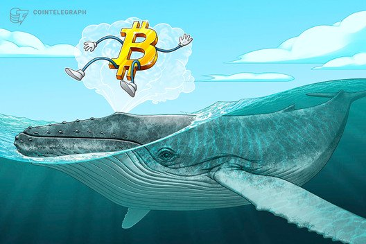 Bitcoin Whale Suggests BTC Price Will Crash — Halving Is Priced in 1