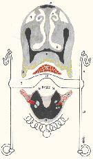 thumbnail of figure 2