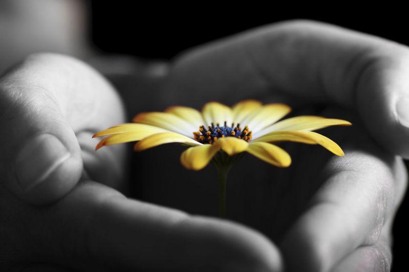 Foto: Shutterstock.com, mali žuti cvijet