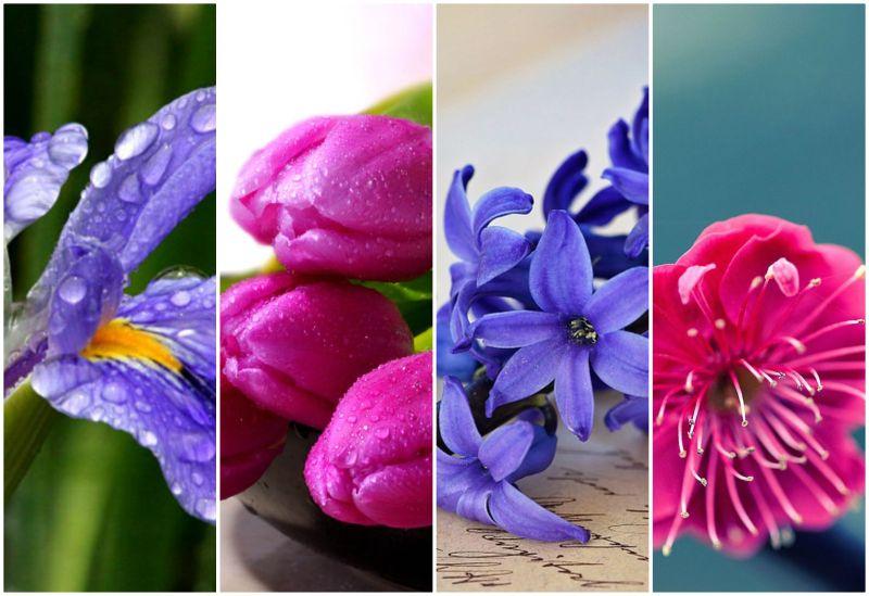 cvijece, četiri cvijeta