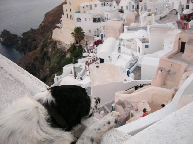 Dog\'s life in Santorini