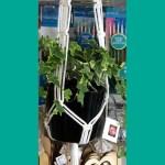 Macramé a Plant or Lantern Holder