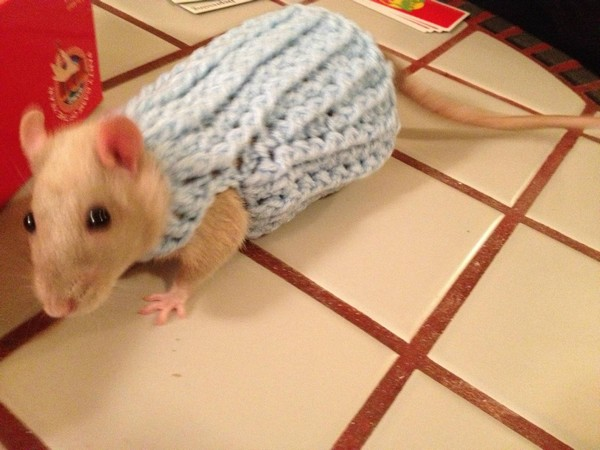 Mouse sweater