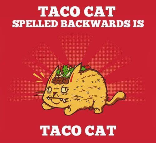 Taco cat