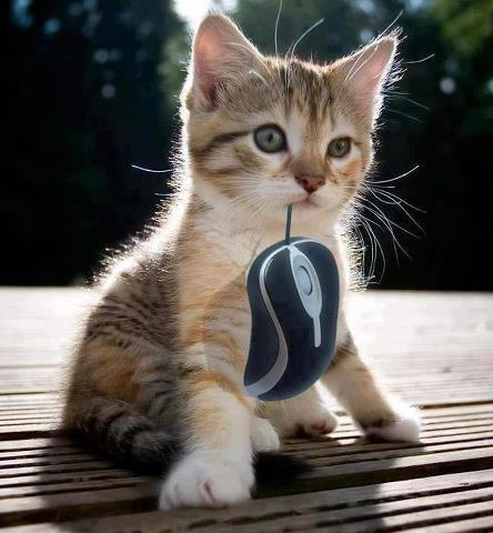 Caught a mouse