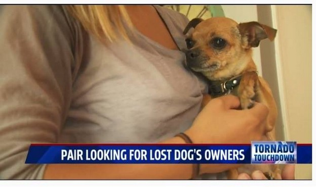 Pair looking for lost dogs owner