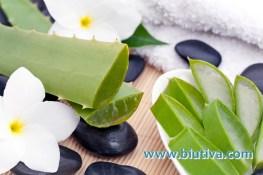 8 Manfaat Lidah Buaya untuk Kesehatan & Kecantikan Kulit