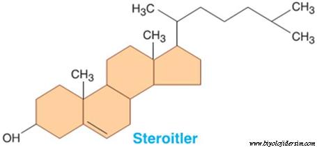 steroitlerin yapısı