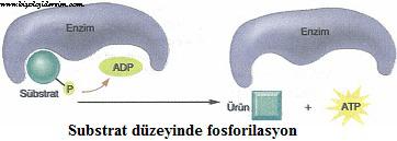 substrat düzeyde fosforilasyon