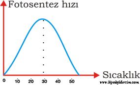 fotosentez hızına sıcaklığın etkisi