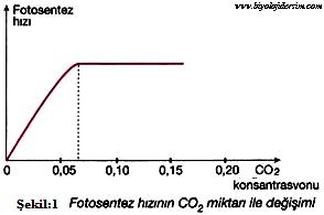 fotosentez hızı CO2 etkisi