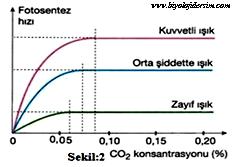 fotosentez hizina CO2 ve isik_etkisi