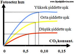 CO2 ve ışık şiddeti etkisi