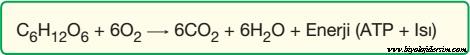 oksijenli solunum denklemi