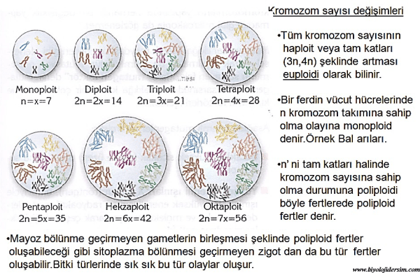 kromozom sayısı değişmeleri