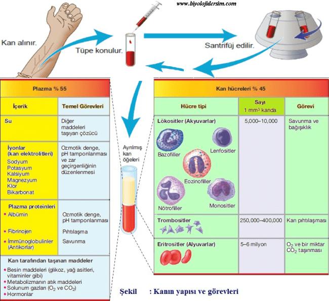 kkanın yapısı ve işlevi