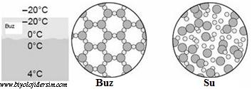 su ve buzun moleküler yapısı
