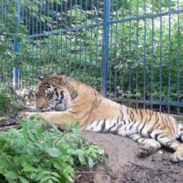 """Se fac ultimele retuşuri de la zoo. Animalele se mută în noile """"case"""" până la finele săptămânii"""