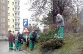 Firma de casă a Primăriei Constanța va îngriji spațiile verzi ale Brașovului. Aceasta ar urma să încaseze peste 11 milioane de euro, în 4 ani