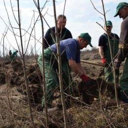 Costurile de amenajare a pepinierei care se va întinde pe 0,9 hectare la Râşnov, estimate la 2,14 milioane de lei