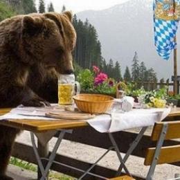 Călătoria culinară a unui jurnalist american aflat în căutarea fripturii de urs perfecte