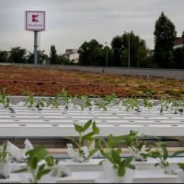 Kaufland începe amenajarea de grădini cu legume, flori sau arbuști pe acoperișurile sau în parcările magazinelor