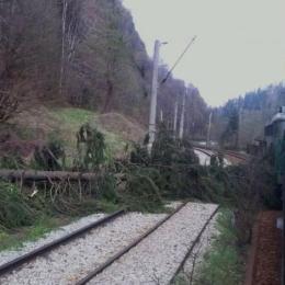 Problema copacilor periculoși de pe marginea căii ferate spre București, departe de a fi rezolvată: CFR plătește tăierea, Direcția Silvică vrea lemnul