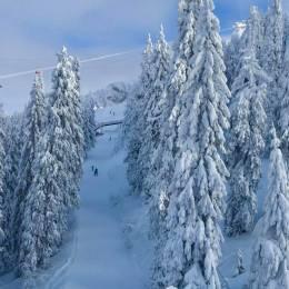 Arborii periculoși din zona pârtiilor, care riscă să cadă din cauza greutății zăpezii, vor fi tăiați