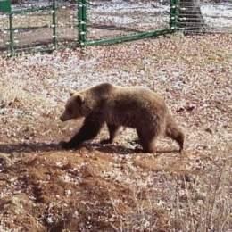 """Ursoaica Ciere, care băga spaima în ploieșteni în 2015, a fost adoptată de Cinema One. Numele i-a fost dat de o actriță din seria """"Harry Potter"""""""