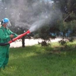 Primăria Brașov începe o nouă luptă cu țânțarii, după ce condițiile meteo au favorizat creșterea numărului acestora
