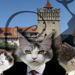 """Dracula """"miaună"""" în weekend la Castelul Bran. Peste 100 de pisici de rasă din toată Europa vor fi expuse lângă cel mai vizitat castel din țară"""