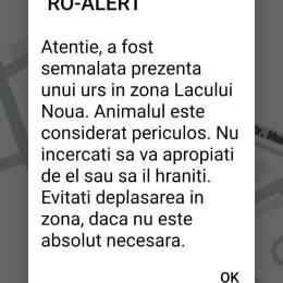 RO-ALERT Urșii pun stăpânire pe Brașov. Un alt mesaj de avertizare vizează cartierul Noua