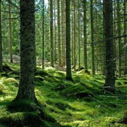 Peste 4.000 de hectare de păduri virgine din județul Brașov vor fi puse sub protecție