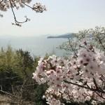 瀬戸内の山桜