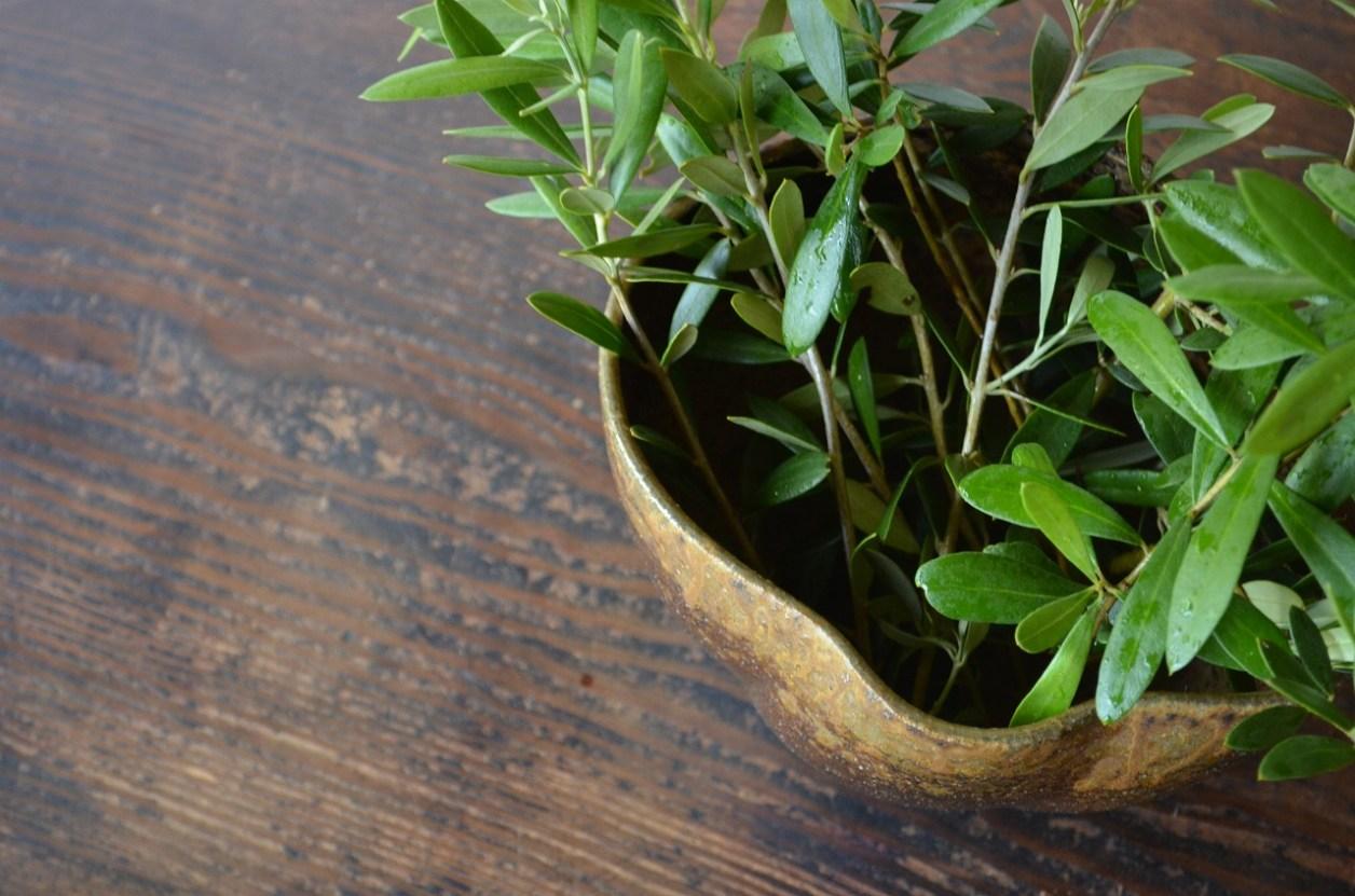 備前花器 Takuma Watanabe -オリーブの木-