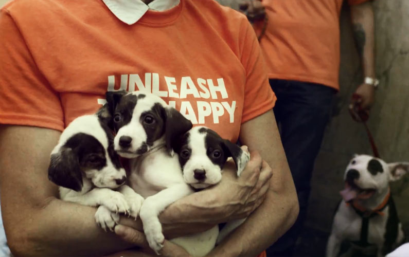 What Would You Do If 20 Dogs and Puppies Come Into Your Office?