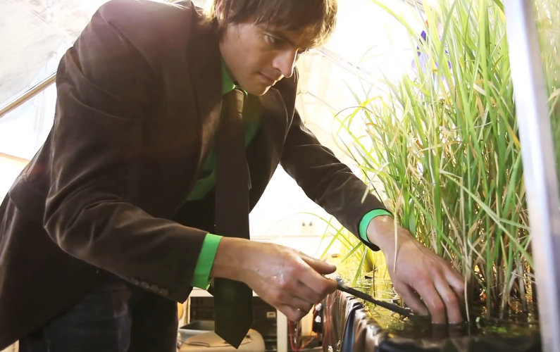 A Startup Generates Electricity from Living Plants